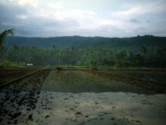 Reisbauern auf Bali